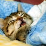 一日一食生活 睡眠について